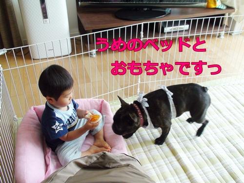 20110714_10.jpg
