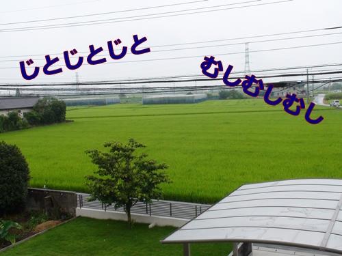 20110729_4.jpg