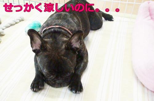 20110819_2.jpg