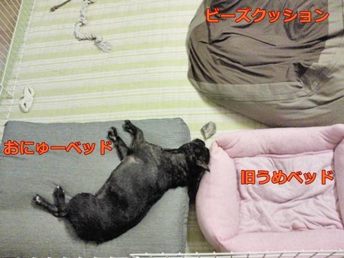 20110830_1.jpg