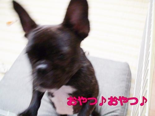 20110910_3.jpg