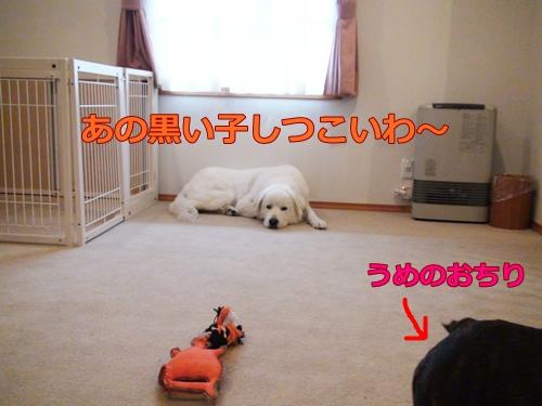 20110923_11.jpg