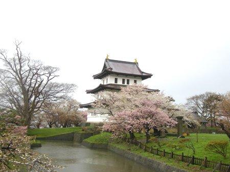 松前城と桜と雨