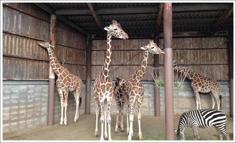 akiyoshi-safari012.jpg