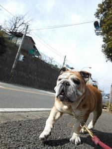 18日 お散歩 (10)