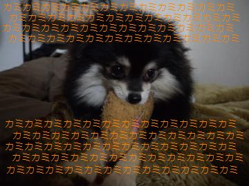151_20101214223746.jpg