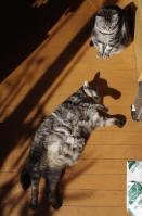 陽だまりネコ