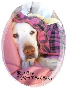 寒い日は・・・