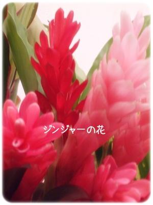 2012_03120005.jpg