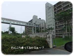 2012_06040055.jpg