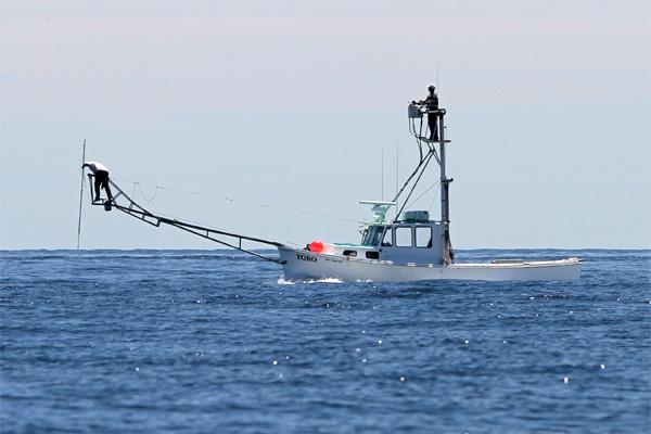 「突きん棒漁船」の画像検索結果