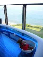 pool2012