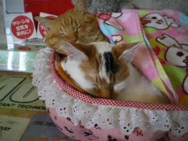 仲良し寝1