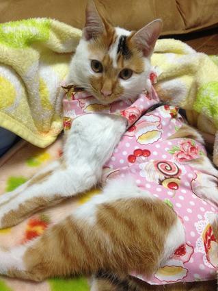 ちよ術後服ピンク