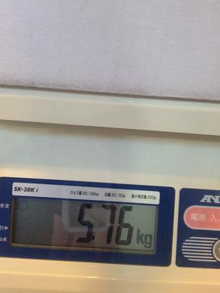 うみ体重130-2