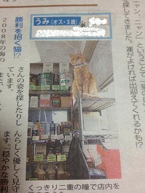 猫の日新聞