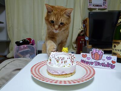 425うみケーキ