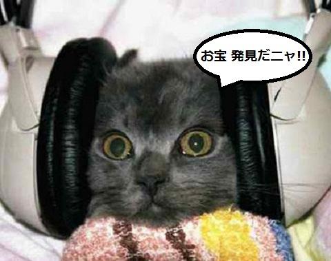Pussy_cat_kitten_funny_08.jpg