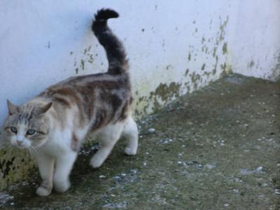 アルベロベッロ近所の猫ちゃん2