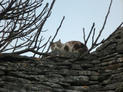トゥルッリの屋根の上の猫2