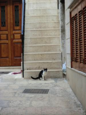 チステルニーノの猫ちゃん