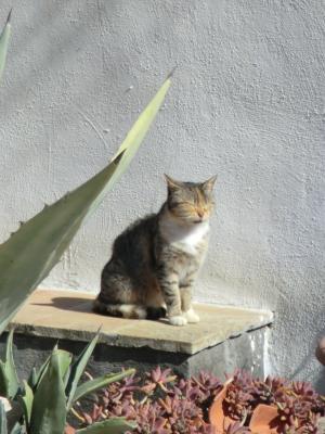 マテーラの猫ちゃん