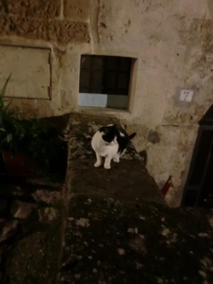 夜のマテーラと猫ちゃん