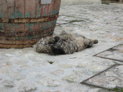 マテーラの長毛猫ちゃん