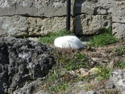 昼寝している猫ちゃん