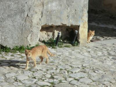 猫ちゃん二人