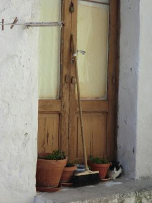 サッシ・カヴェオーソ地区の子猫2