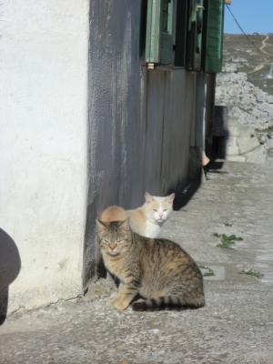 サッシ・カヴェオーソ地区の猫たち2