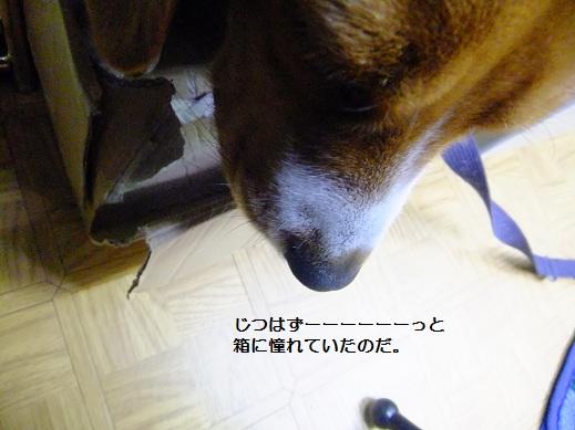 021_20110204183832.jpg