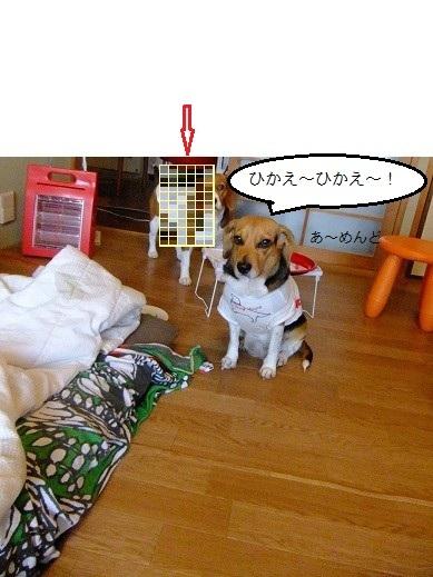 056_20101216014524.jpg