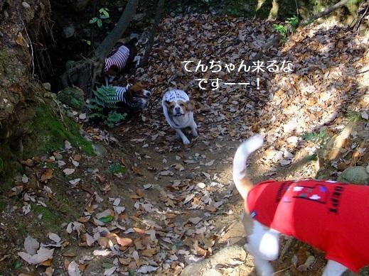 114_20110125004145.jpg