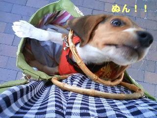 20080602_468950.jpg