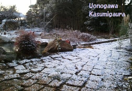 yukinoshiba