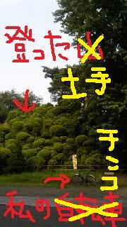 pn6.jpg