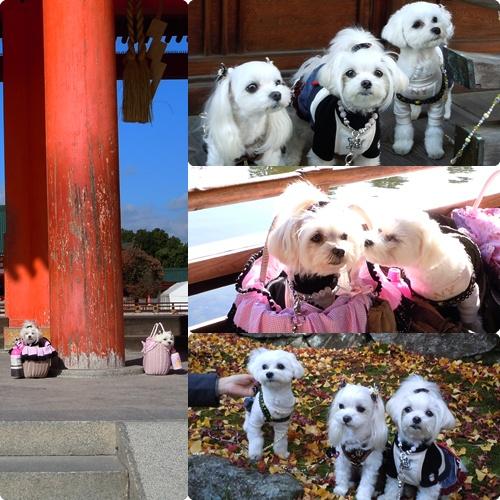 京都2cats