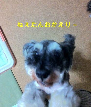 IMG_6876.jpg
