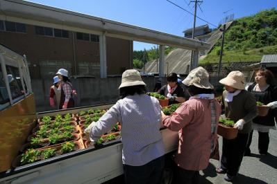 2010-05-29_EOS 7D_1461、「花いっぱい運動、神石高原商工会油木支部女性部」、2010.5.29.、油木、3