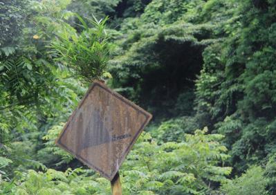 2010-06-30_EOS 7D_2565トリミング、県道26号・新市七曲西城線、三和~新市、「標識を突き抜ける笹竹」、1