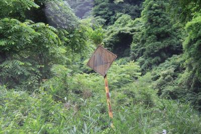 2010-06-30_EOS 7D_2566、県道26号・新市七曲西城線、三和~新市、「標識を突き抜ける笹竹」、2