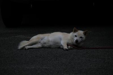 2010-06-30_EOS 7D_2571、2010.6.30.新市、「暑さでバテ気味の犬」、「お昼寝からの目覚め」、2