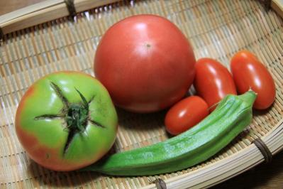 2010_08_16EOS 7D5456、2010.8.16.井田、「夏野菜、トマト&オクラ」、2