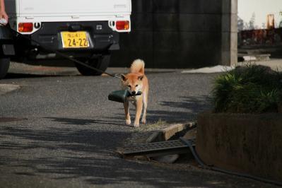 2010_08_17EOS 7D5492、2010.8.17.三和・小畠「藤原さんちのワンちゃん、お散歩」、5