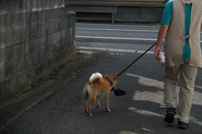 2010_08_17EOS 7D5508、2010.8.17.三和・小畠「藤原さんちのワンちゃん、お散歩」、3