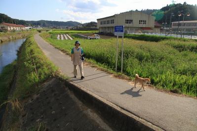 2010_08_17EOS 7D5519、2010.8.17.三和・小畠「藤原さんちのワンちゃん、お散歩」、1