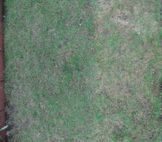 10月21日 真上から撮影
