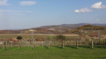 山崎ワイナリー前の景色